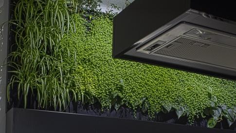Brno, zelená stěna v kuchyni